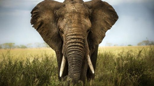 Красивые картинки на всемирный день защиты слонов (17)
