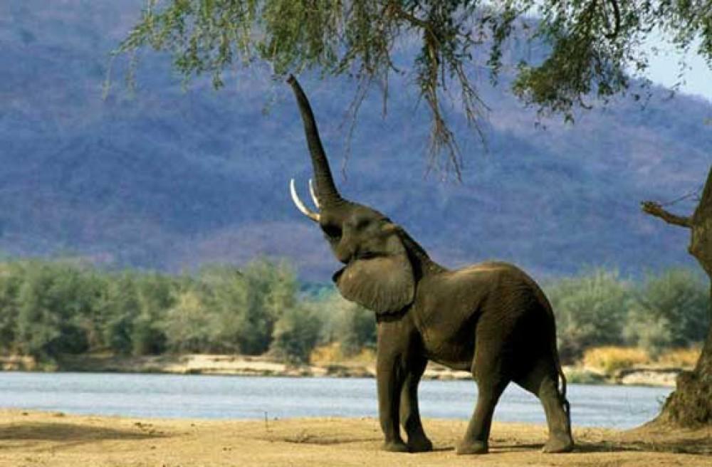Красивые картинки на всемирный день защиты слонов (18)