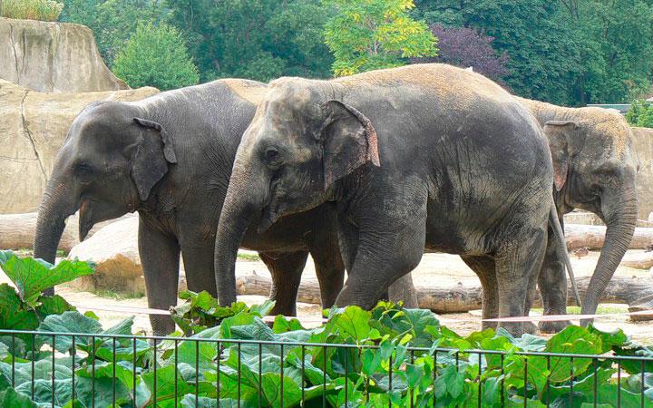 Красивые картинки на всемирный день защиты слонов (19)