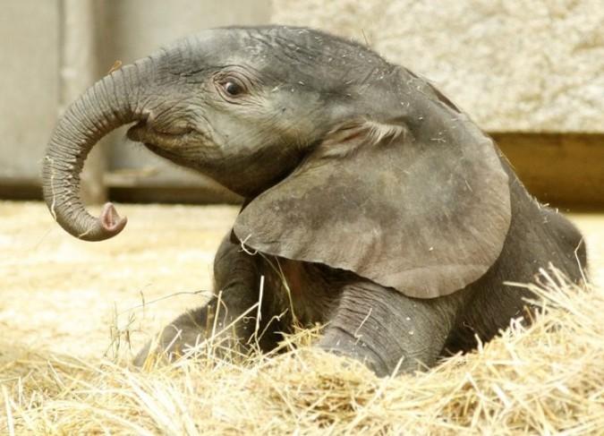 Красивые картинки на всемирный день защиты слонов (20)