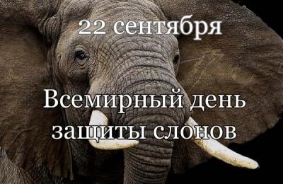 Красивые картинки на всемирный день защиты слонов (3)