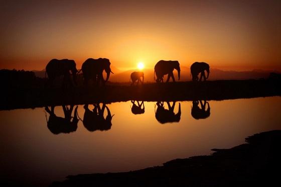 Красивые картинки на всемирный день защиты слонов (4)