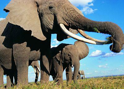 Красивые картинки на всемирный день защиты слонов (5)