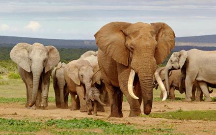 Красивые картинки на всемирный день защиты слонов (6)
