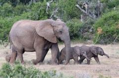 Красивые картинки на всемирный день защиты слонов (7)