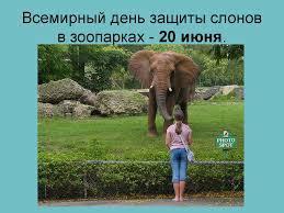 Красивые картинки на всемирный день защиты слонов (9)