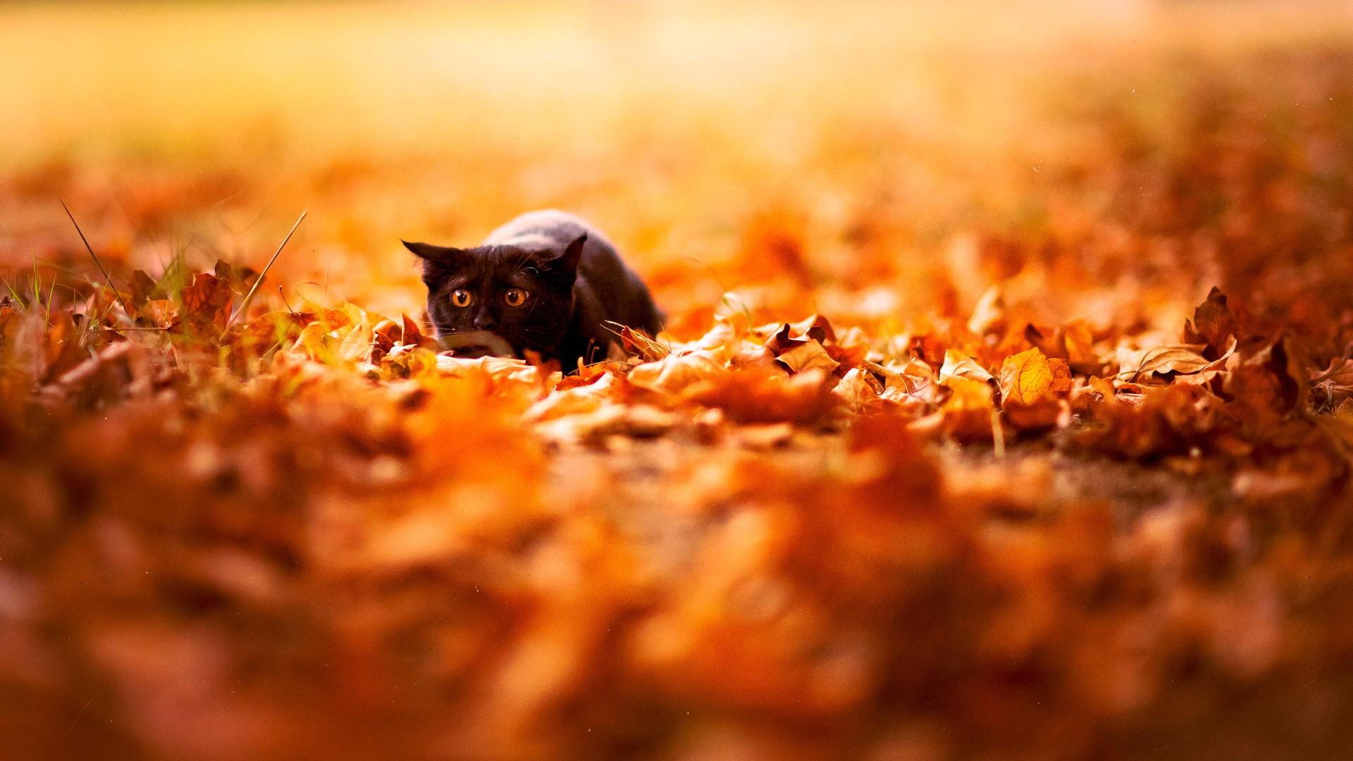 Красивые картинки на рабочий стол октябрь (11)
