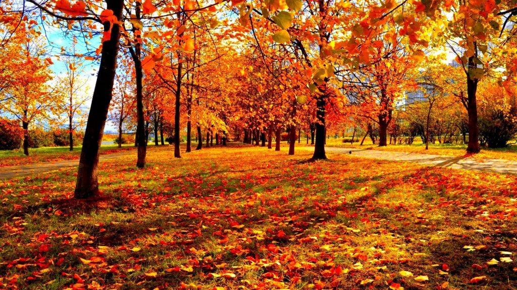 autumn forest nature fall desktop backgrounds Best of Fall Lands