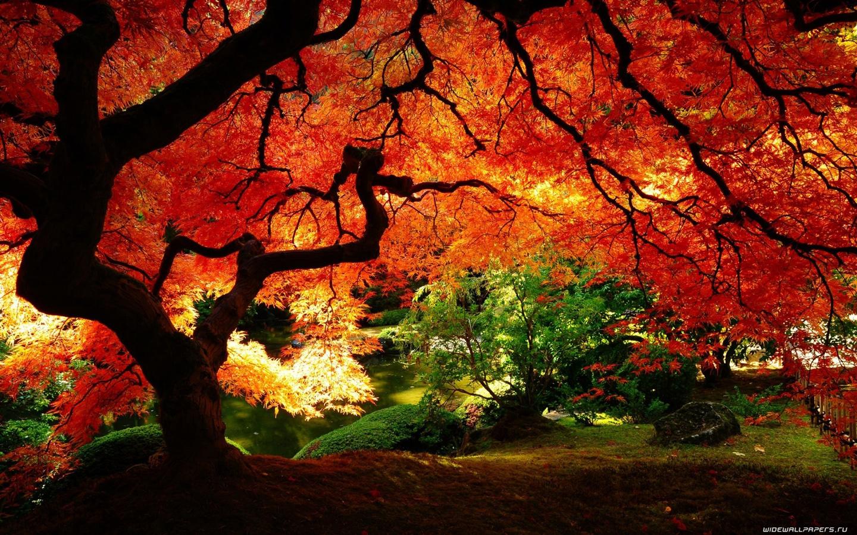 варианта выбор сад оранжевый картинки на рабочий стол углубляет практику
