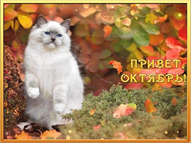 Красивые картинки про октябрь месяц с надписями014