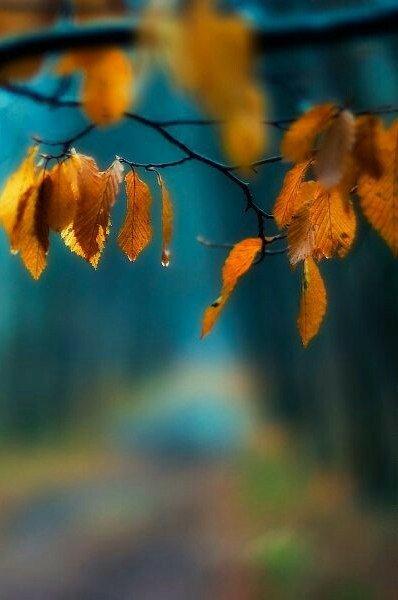 Красивые картинки сказочные осень (10)