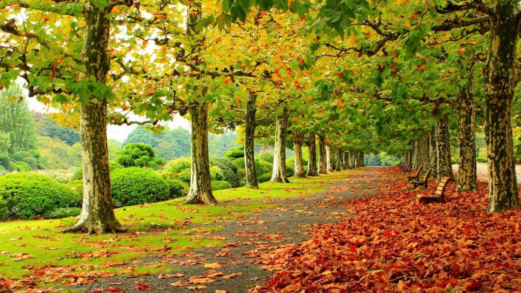 Красивые картинки сказочные осень (12)