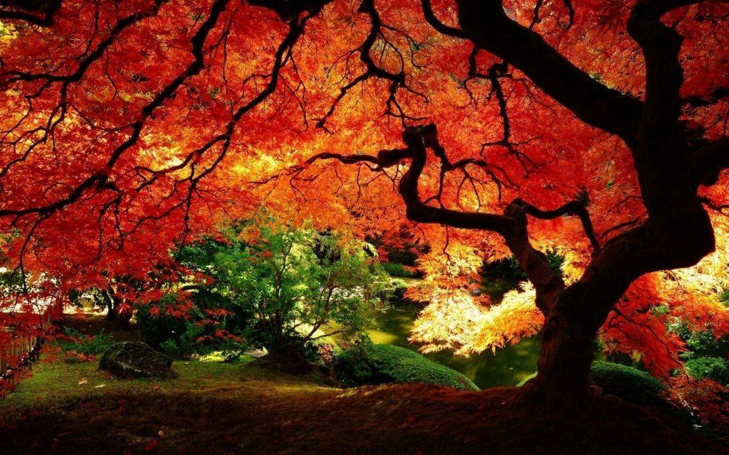 Красивые картинки сказочные осень (13)