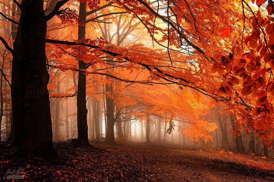 Красивые картинки сказочные осень (2)