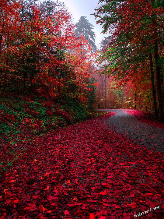 Красивые картинки сказочные осень (4)