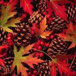Красивые картинки сказочные осень