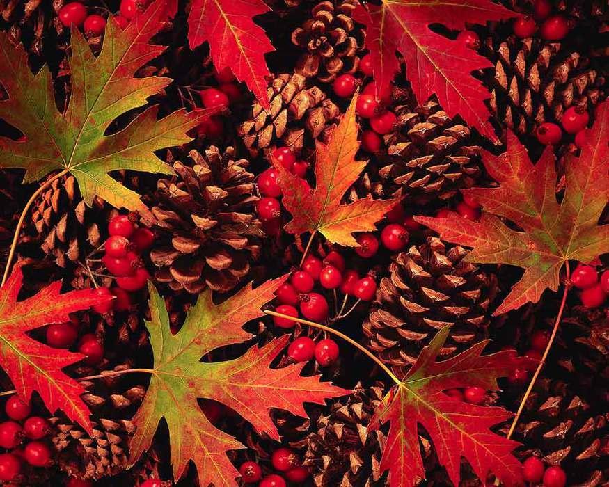 Красивые картинки сказочные осень (5)
