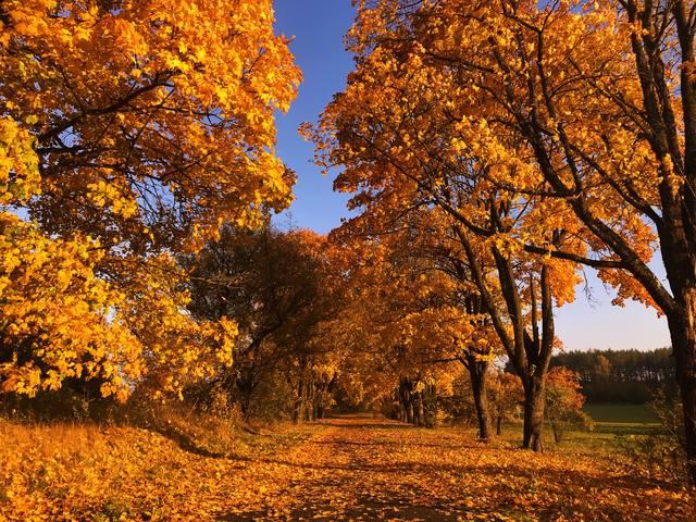 Красивые картинки сказочные осень (6)