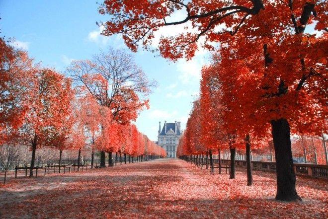 Красивые картинки сказочные осень (7)