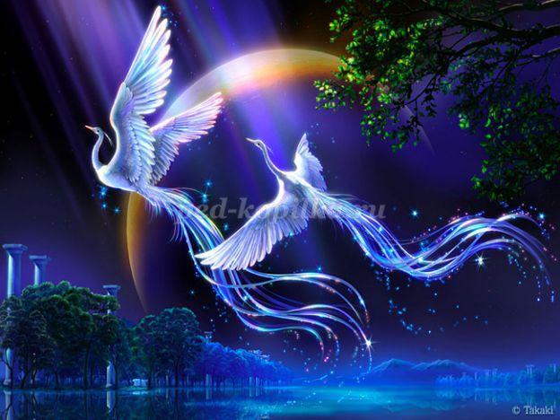 Красивые картинки сказочные птички (13)
