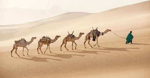 Красивые картинки с международным днем караванщика (1)