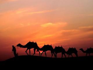 Красивые картинки с международным днем караванщика (11)