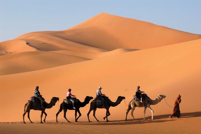 Красивые картинки с международным днем караванщика (17)