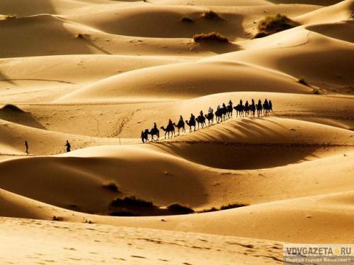 Красивые картинки с международным днем караванщика (6)