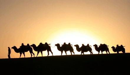 Красивые картинки с международным днем караванщика (8)