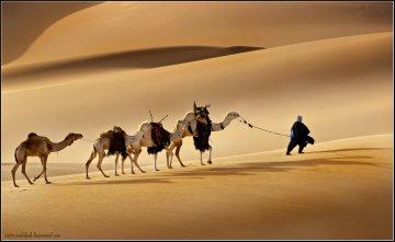 Красивые картинки с международным днем караванщика (9)