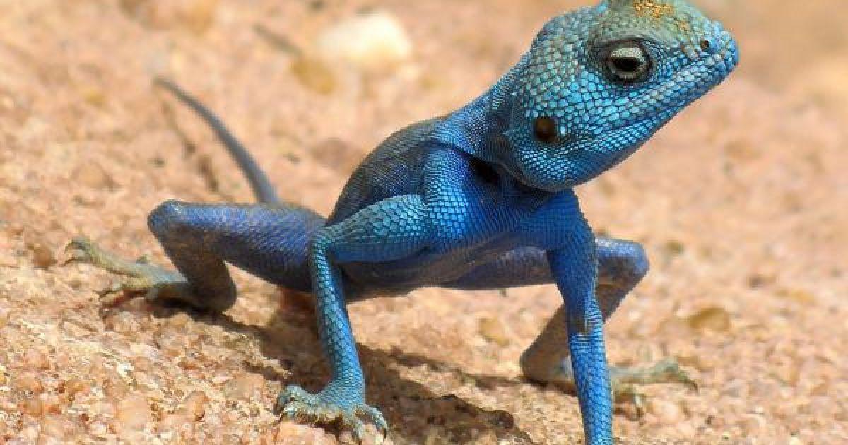 Красивые картинки с ящерицами (1)