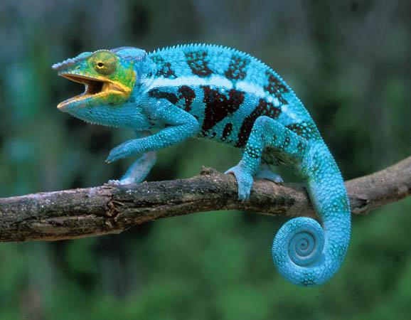 Красивые картинки с ящерицами (12)