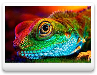 Красивые картинки с ящерицами (15)