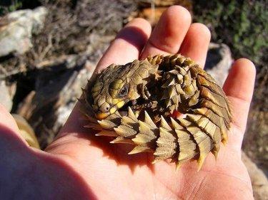 Красивые картинки с ящерицами (17)