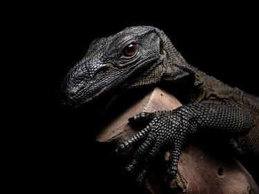 Красивые картинки с ящерицами (20)
