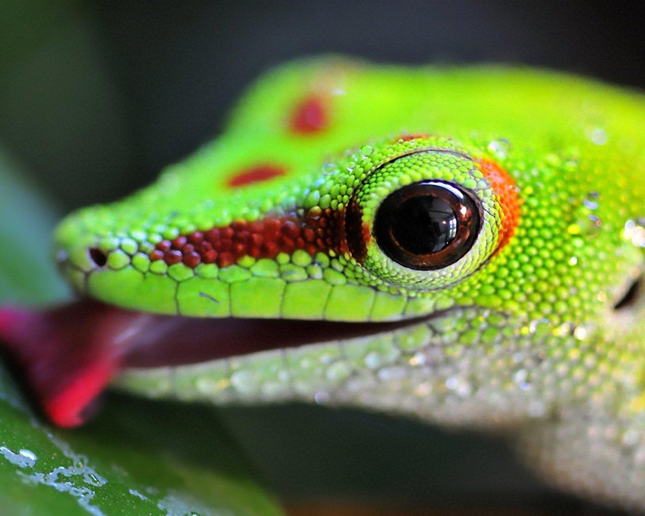 Красивые картинки с ящерицами (23)