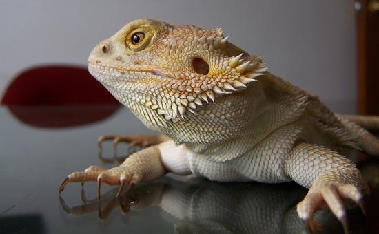 Красивые картинки с ящерицами (26)