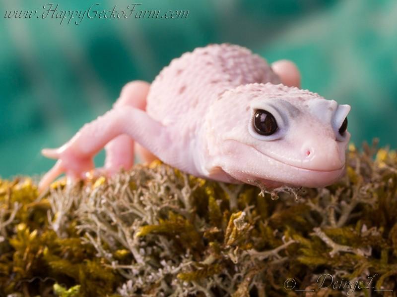 Красивые картинки с ящерицами (3)