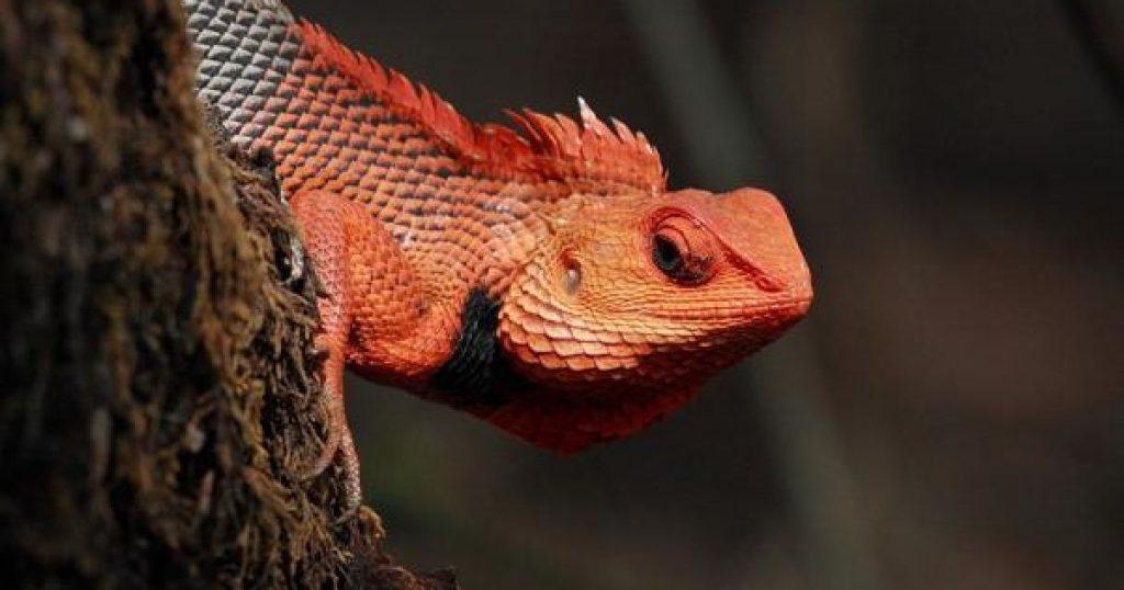Красивые картинки с ящерицами (5)