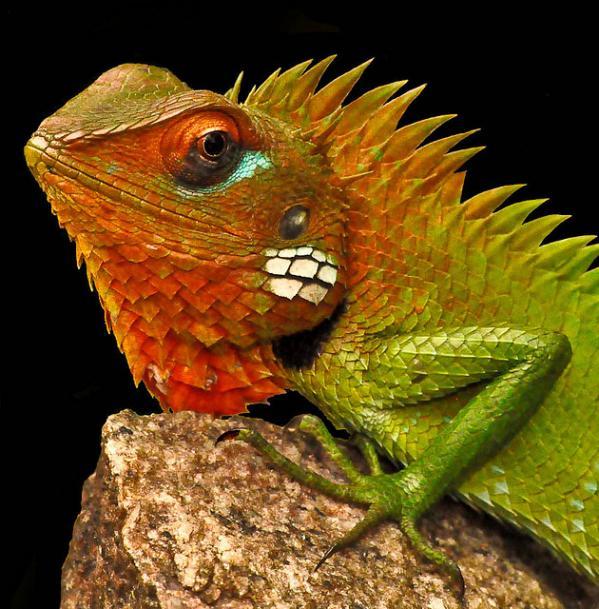 Красивые картинки с ящерицами (7)