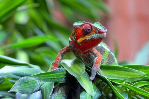 Красивые картинки с ящерицами (9)