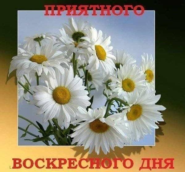 Красивые открытки с добрым утром в воскресенье018
