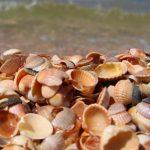 Красивые поделки из ракушек на тему море