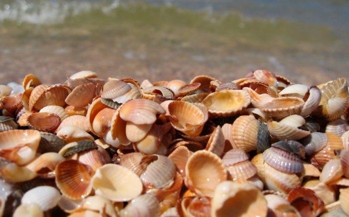 Красивые поделки из ракушек на тему море006