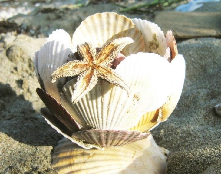 Красивые поделки из ракушек на тему море009