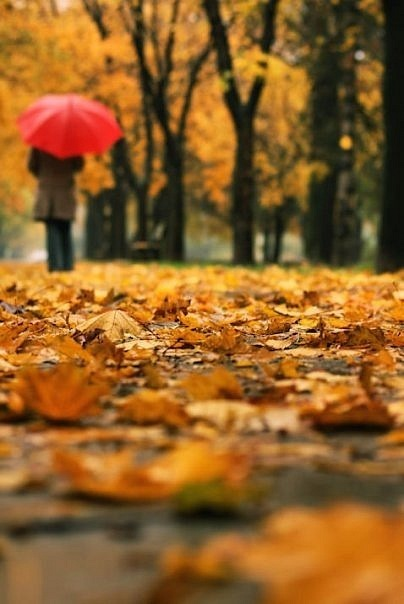 Красивые фото девушек осенью со спины с зонтом (20)