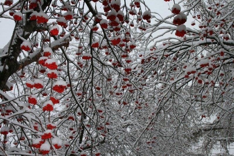 Красивые фото зимнего вида из окна005