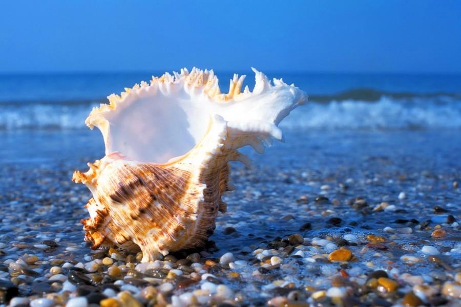Красивые фото и картинки на всемирный день моря (27)