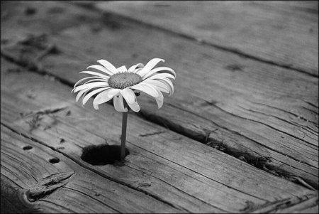Красивые черно-белые рисунки про грусть008