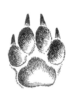 Красивый трафарет лапки собаки (15)